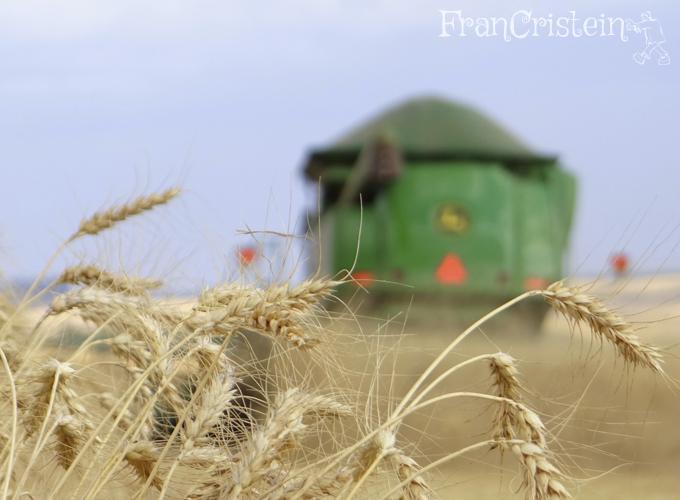 AMEI ESSA FOTO, amo trigo + STS <3