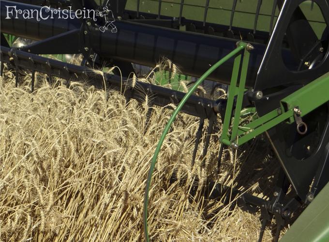 Plataforma comendo o trigo