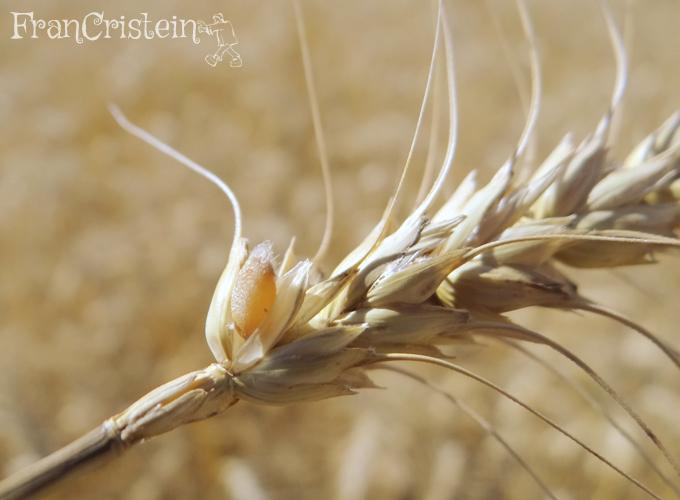 Grãozinho de trigo own cuti cuti