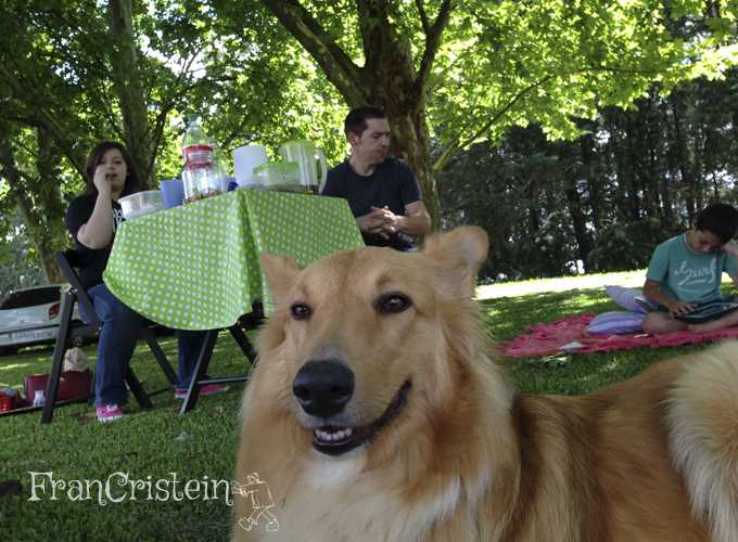 Lassie divando como sempre e ROBERTS