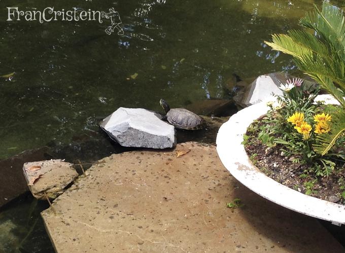 Uma tartaruga