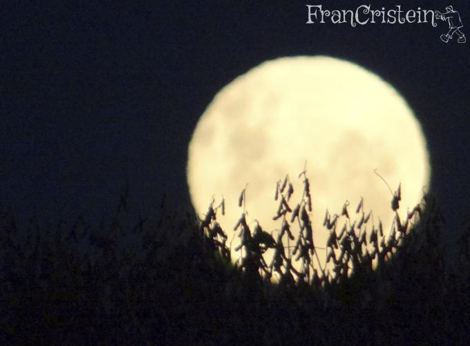 Lua cheia e soja (amo essa foto)