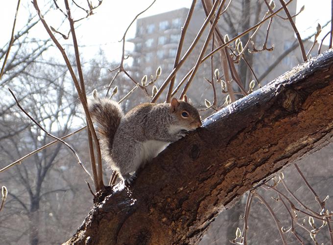 Ô mu deus, esquilinho curte uma água gelada!