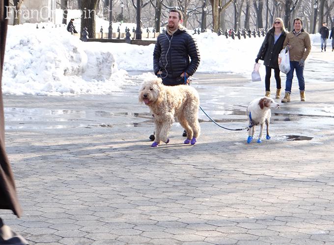 Cachorros com pantufas que protegem os pés do frio, simplesmente own