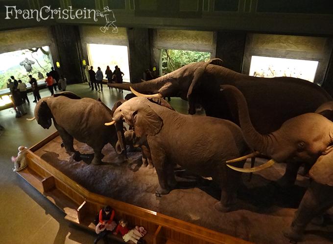 Essa era a manada de elefantes que comentei, lembram?