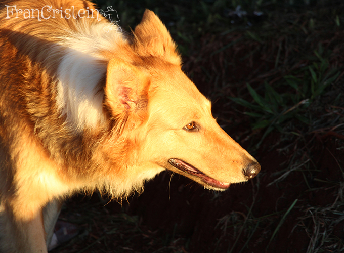 Lassie analisando a soja pra ver se estava seca