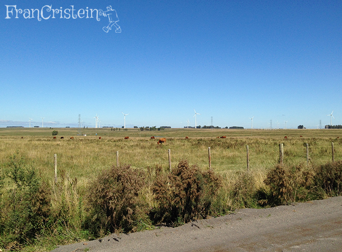Vacas e aerogeradores
