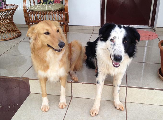 Lassie e Panda apenas sentam igual gente nos degraus hauihaiuhaiu
