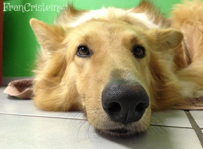 Lassie cheirando vocês aí do outro lado da tela hahaha
