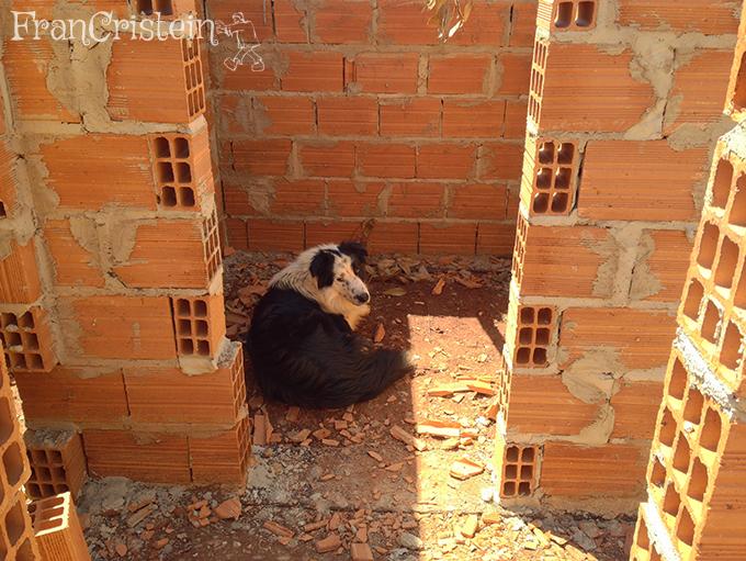 Um porquinho preto e branco na despensa repousando