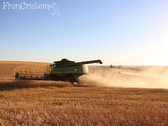 Para acabar o dia e quase acabar a colheita de trigo